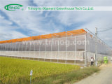Polycarbonate Greenhouse multi span greenhouse