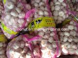New Harvest Fresh Pure White Garlic (size 5.5cm&up)