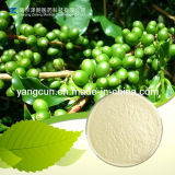 Natural Green Coffee Bean 50% Chlorogenic Acid