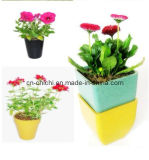Bamboo Fiber Biodegradable Square Flower Pots (ZC-F20016)