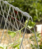 Cucumber Trellis for Raised Beds or Small Garden
