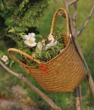 Hot Sell Handmade Straw Basket (BC-S1236)