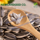 Wholesale Chinese Sunflower Seeds with Type 363, 5009, 601, 0409