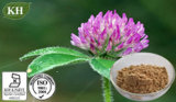Red Clover Extract: Total Isoflavon 10%, -80% by HPLC.
