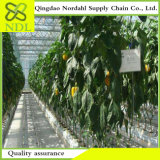 High Quality Multi Span Hydroponic Greenhouse System
