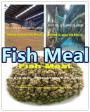 Fish Food for Fish and Feed Additive