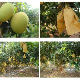 Water Proof Protective Fruit Tree Wrapping Bag for Apple Grape Pear Peach Loquat Grow