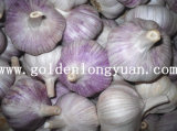 Good Quality Normal White Garlic From Longyuan