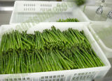 IQF/Frozen Green Asparagus (01)