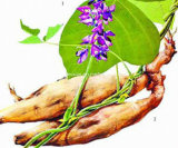 Kudzu Root Extract, Puerarin 40%-98% by HPLC, CAS 3681-99-0