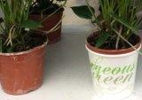 Wholesale Paper Flower Pots /Garden Creative Pot / High Quality Paper Flower Pot Decoration