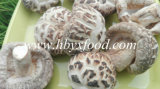 Dried White Flower Mushrooms Whole in Vacuum Packed