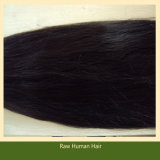 Unprocessed Remy Human Hair Bulk Brazilian Virgin Hair (B-10)