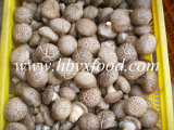 Hot Sales Dried Smooth Shiitake Mushroom with Packing 5kg or 10kg Vegetable