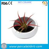 New Design Half Flower Pot for Home Decoration