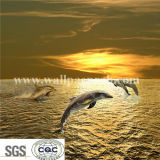 Dolphins Sea Mural Style Kids Children Room Wallcovering