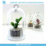 Live Mini Plant, Plant Pet Tree (A, B, C, D, E, F)