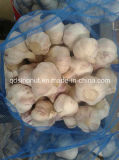 Purple White Garlic (2015crop)