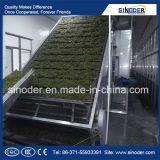 Vegetable Drying Machine / Mushroom Belt Dryer /Mesh Belt Grain Dryer Mesh Belt Dryer