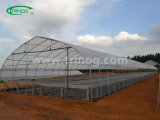 Multi Span Plastic Greenhouse