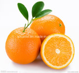 High Quality Delicious Navel Orange