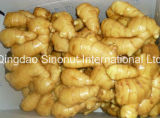 Fresh Ginger with Dehydrated (5%-20%)