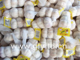 Jinxiang New Crop Fresh Garlic