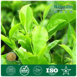100% Organic Chinese Powdered Green Tea (Polyphenols EGCG Catechins)