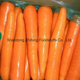 Competitive Fresh Carrot with Good Price