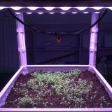 High Quality LED Grow Light Bar with Reflector Cups