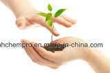 GMP Certified Plant Extract