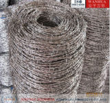 Galvanized /PVC Coated Barbed Wire (Bwg16X16)