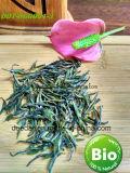 Green Tea of Organic