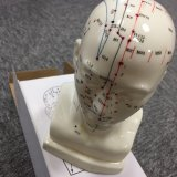 Head Mannequin of Acupuncture Model Studying