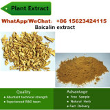 Baicalin 20%-90% Plant Extract Factory Cosmetic Raw Materials Baicalin