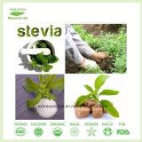 FDA Certificated Stevia Extract Powder Ra40%-Ra99%