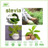Stevia Extract Powder Ra40%-Ra99%