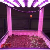 Epistar Chip Patented LED Light for Roots Vegetable