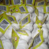 Pure White Garlic with Carton Packing