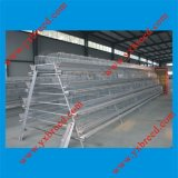 Poultry Farming Equipment for Chicken Layers