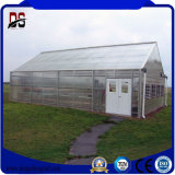 Galvanized Steel Structure Greenhouse for Vegetable Growing