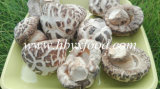 Good Price Shiitake Mushroom/Smooth Mushroom/White Flower Mushroom