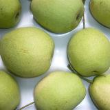 Supplying New Crop Shandong Pear