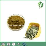 Senna Leaf Extract Saponina+B 8%-20%, Hemostasis and Cathartic