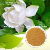 Gardenia Jasminoides Extract Bulk Geniposide