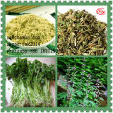 Chinese Herbal Leonurine Benzoic Acid for Female Sex Enhacement 7097-09-8