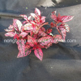 Agricultural Mat Hessian Cloth Weed Control Material