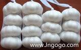 New Crop Good Quality Normal White Garlic 5.0
