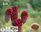 Garden Burnet Extract Treating Breast Cancer