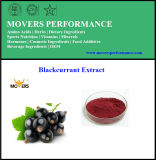 Pure Natural Orangic Best Quality Blackcurrant Extract